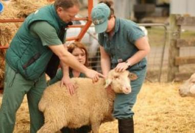 Από 1η Αυγούστου ο θεσμός του κτηνιάτρου εκτροφής στην Αρκαδία