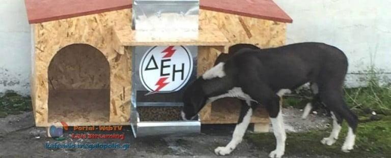 2 νεκρά αδέσποτα σκυλιά βρήκαν εργαζόμενοι στα ορυχεία της ΔΕΗ στην Μεγαλόπολη