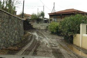 mallota1