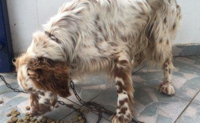 Βρέθηκε σκυλάκι στην Μεγαλόπολη